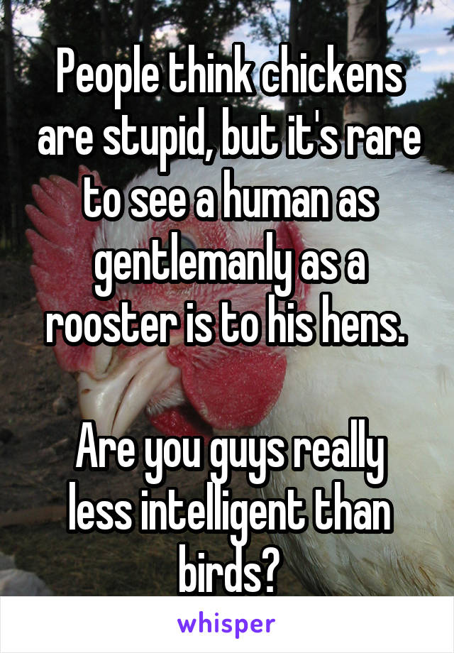 People think chickens are stupid, but it's rare to see a human as gentlemanly as a rooster is to his hens.   Are you guys really less intelligent than birds?