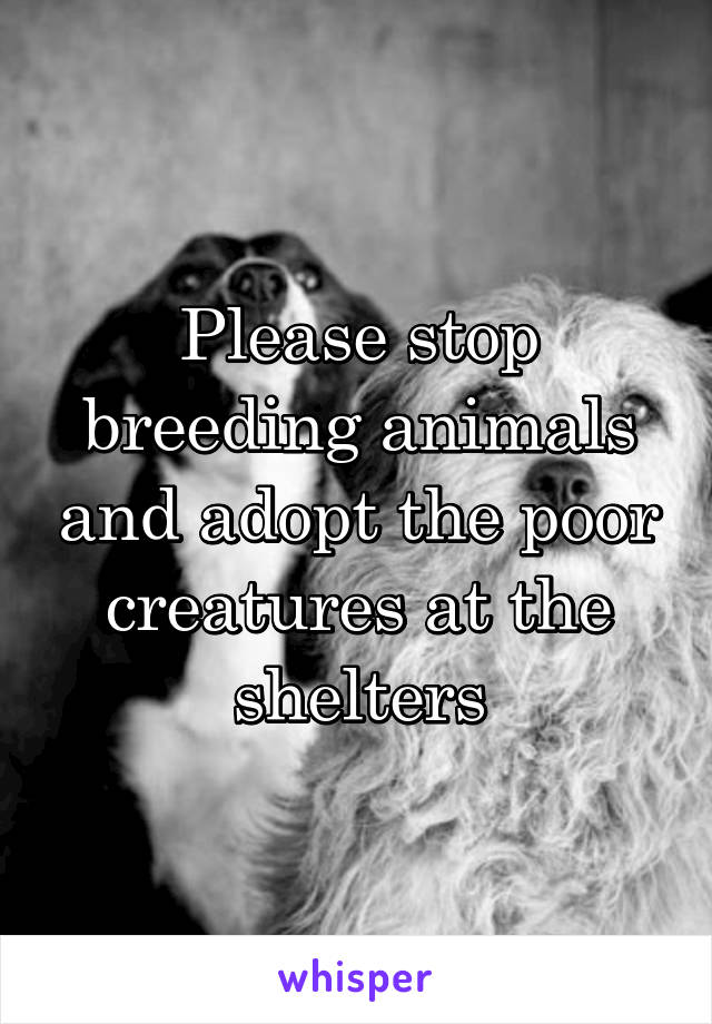 Please stop breeding animals and adopt the poor creatures at the shelters
