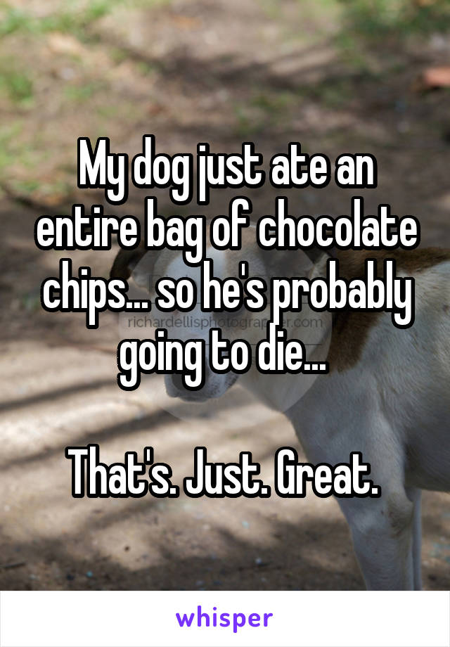My dog just ate an entire bag of chocolate chips... so he's probably going to die...   That's. Just. Great.