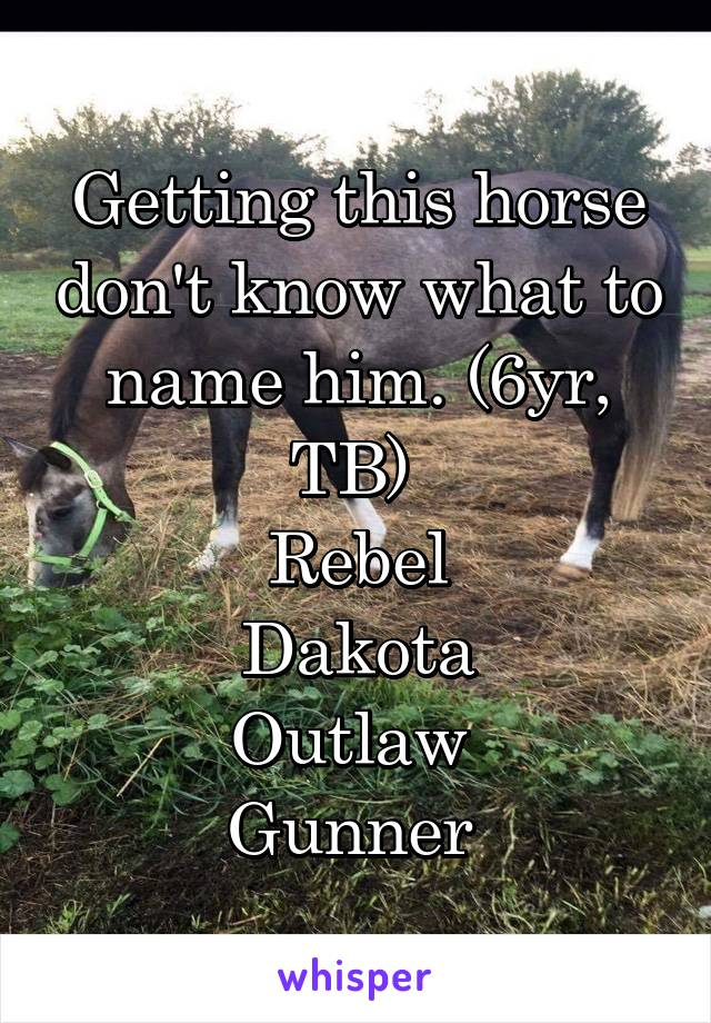 Getting this horse don't know what to name him. (6yr, TB)  Rebel Dakota Outlaw  Gunner