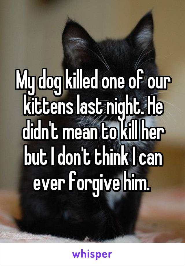 My dog killed one of our kittens last night. He didn't mean to kill her but I don't think I can ever forgive him.