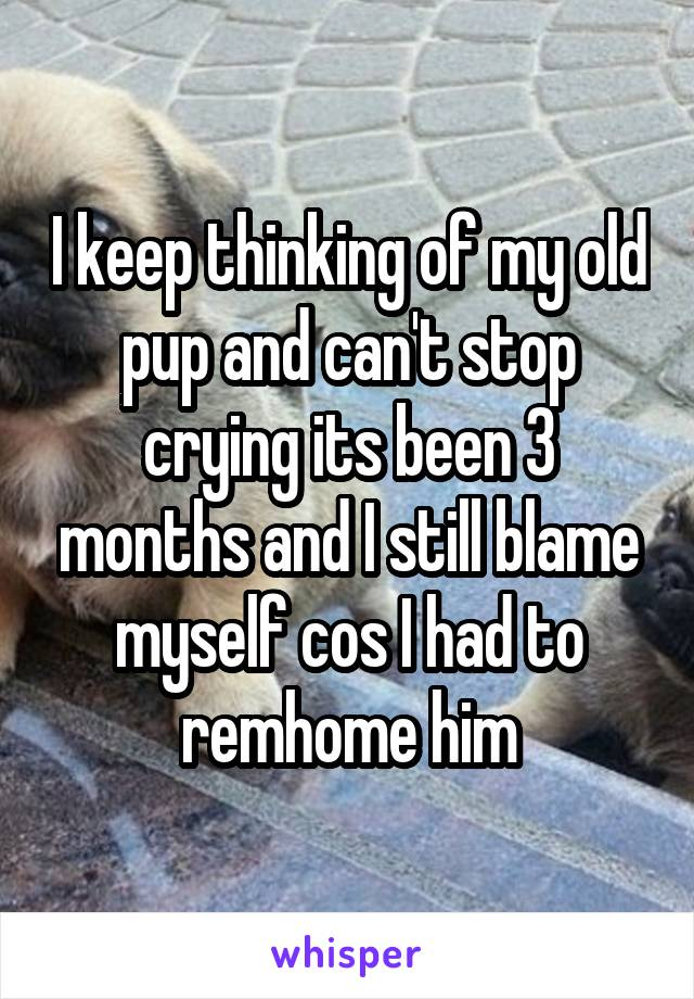 I keep thinking of my old pup and can't stop crying its been 3 months and I still blame myself cos I had to remhome him