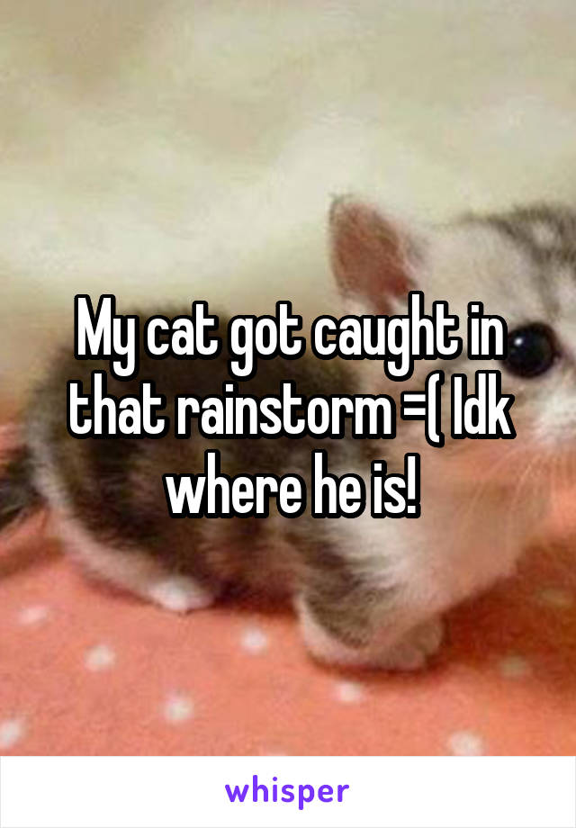 My cat got caught in that rainstorm =( Idk where he is!