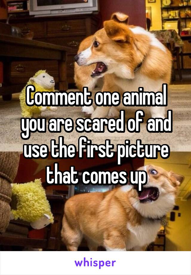 Comment one animal you are scared of and use the first picture that comes up