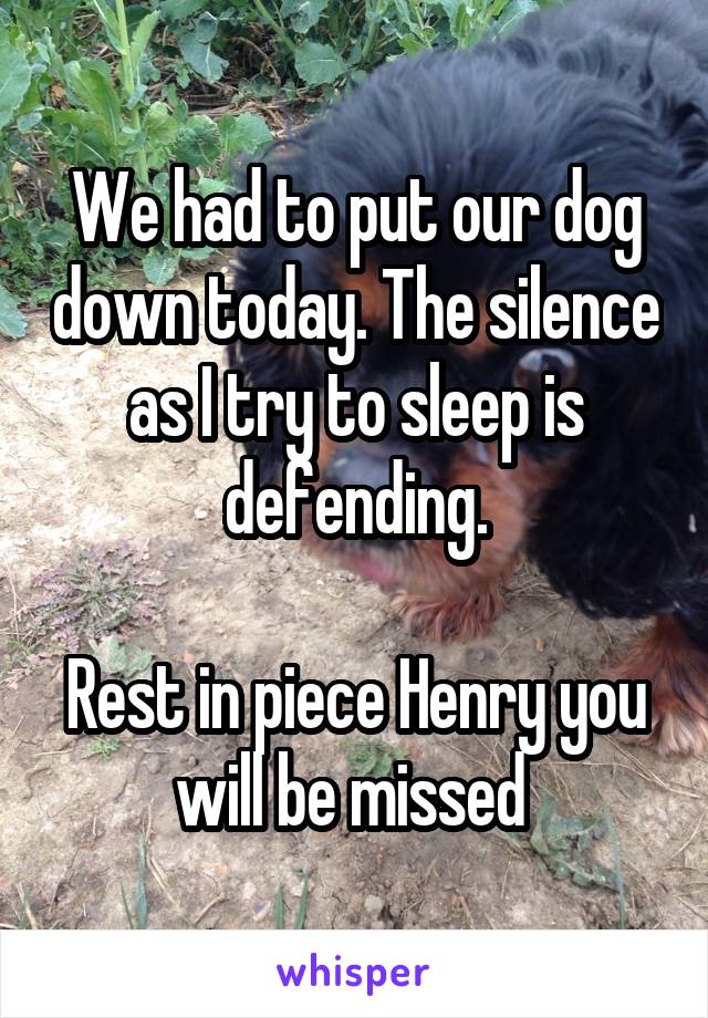 We had to put our dog down today. The silence as I try to sleep is defending.  Rest in piece Henry you will be missed