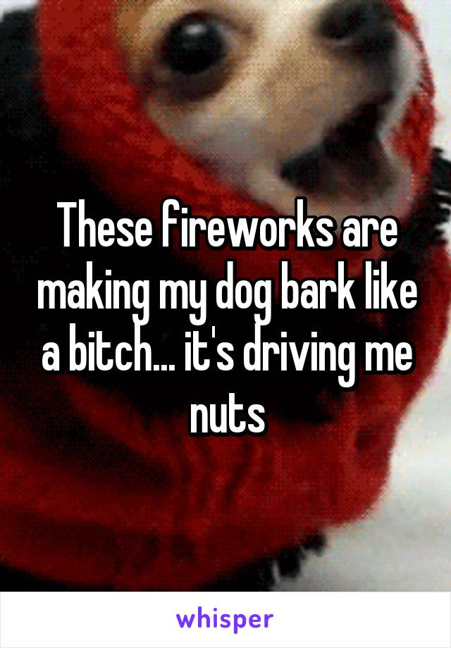 These fireworks are making my dog bark like a bitch... it's driving me nuts
