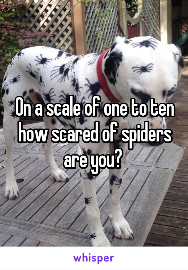 On a scale of one to ten how scared of spiders are you?