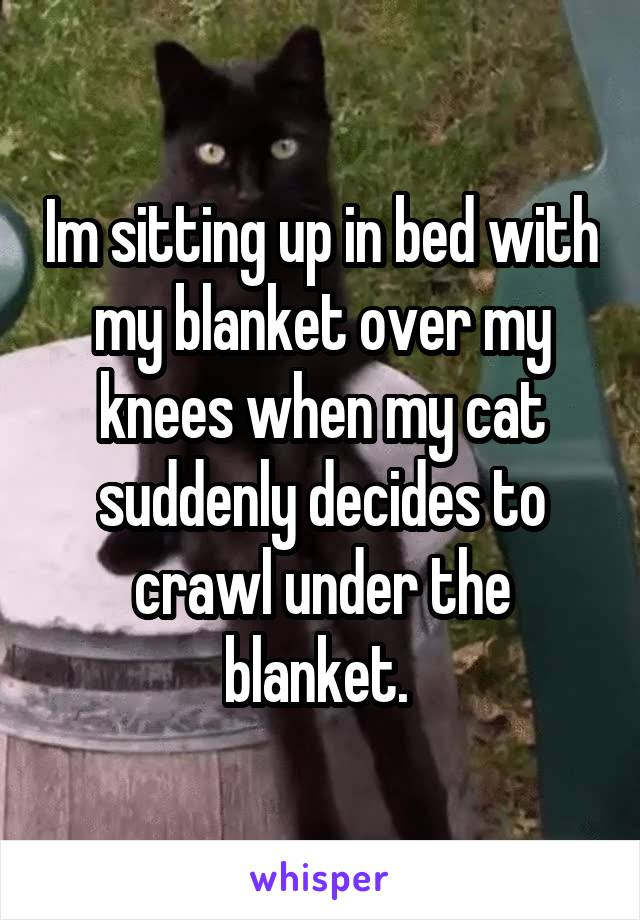 Im sitting up in bed with my blanket over my knees when my cat suddenly decides to crawl under the blanket.