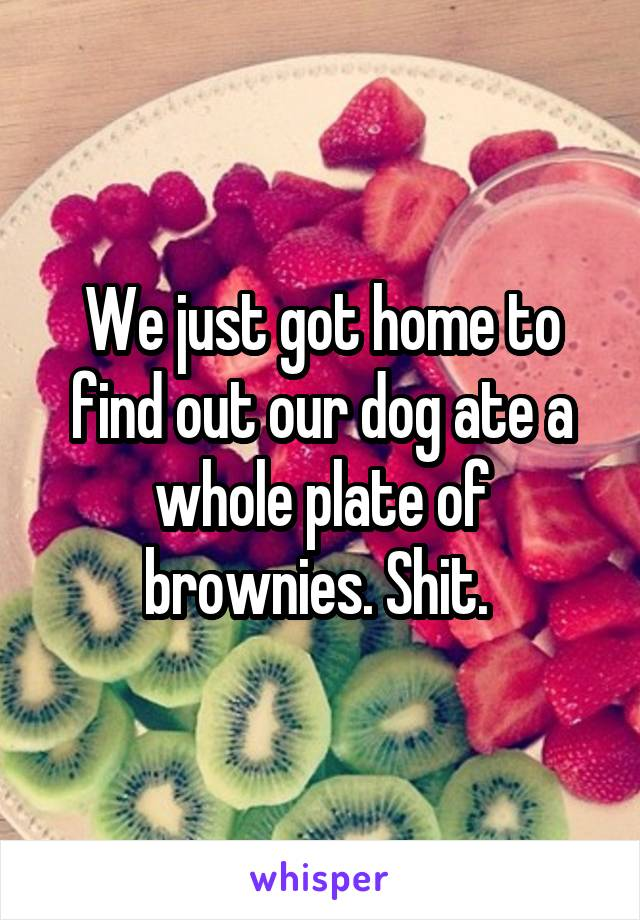 We just got home to find out our dog ate a whole plate of brownies. Shit.