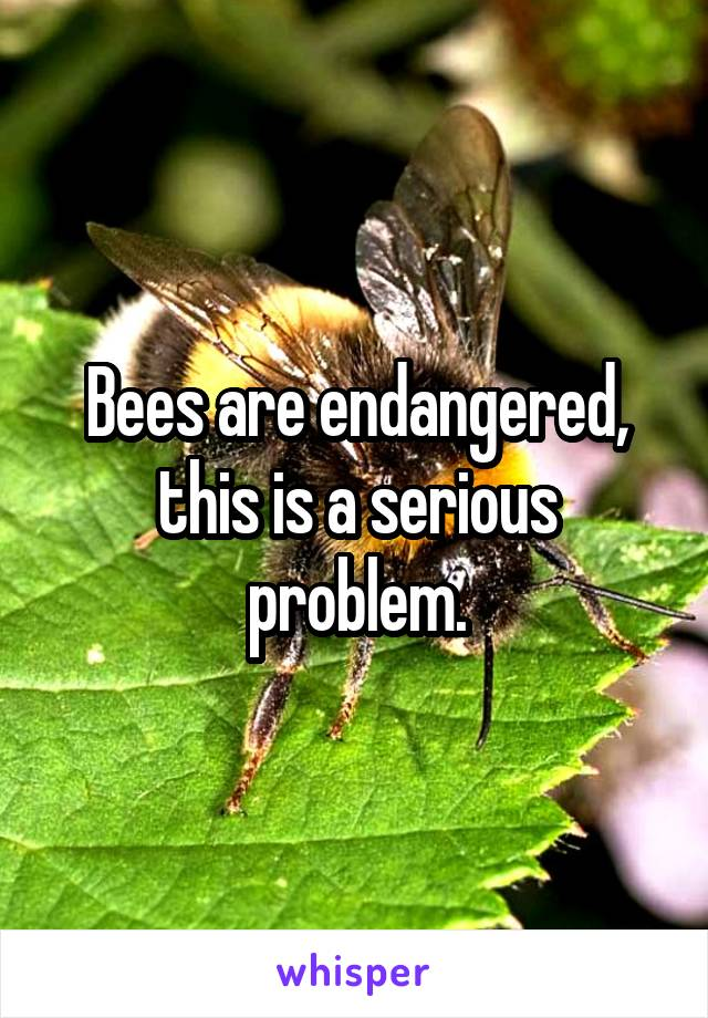 Bees are endangered, this is a serious problem.