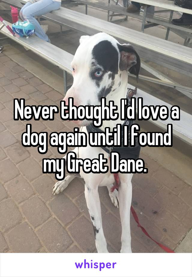 Never thought I'd love a dog again until I found my Great Dane.