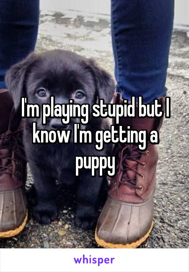 I'm playing stupid but I know I'm getting a puppy