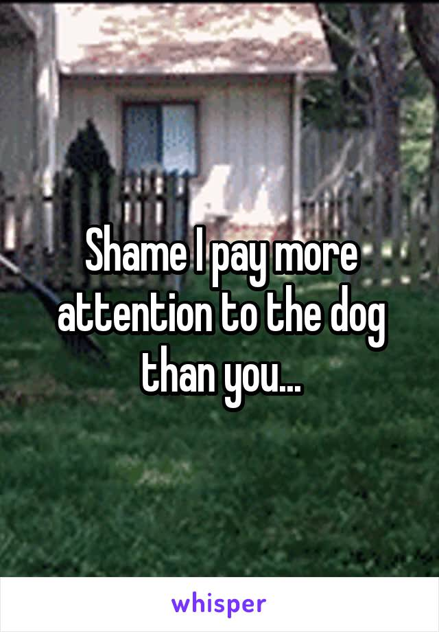 Shame I pay more attention to the dog than you...