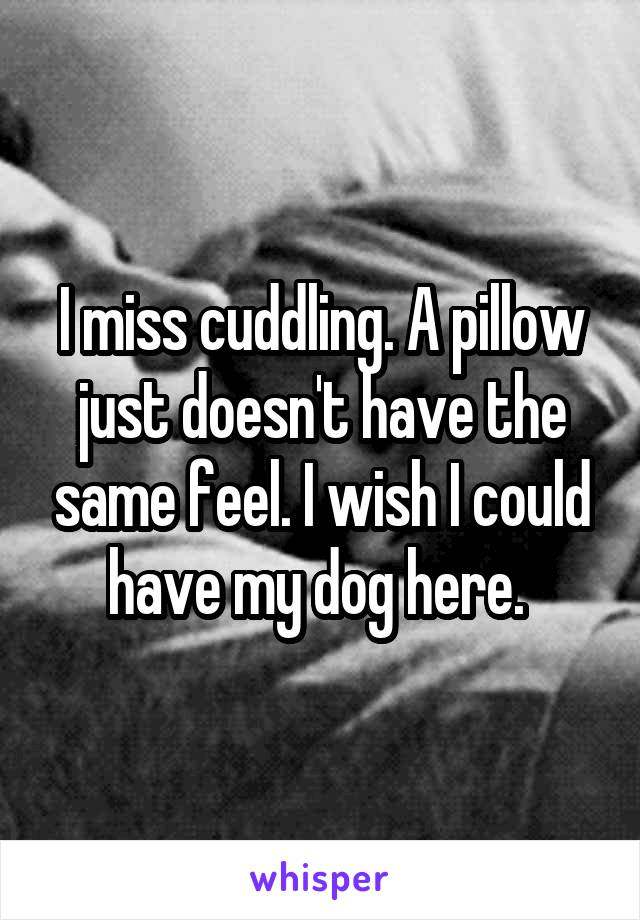 I miss cuddling. A pillow just doesn't have the same feel. I wish I could have my dog here.