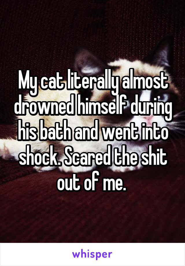 My cat literally almost drowned himself during his bath and went into shock. Scared the shit out of me.