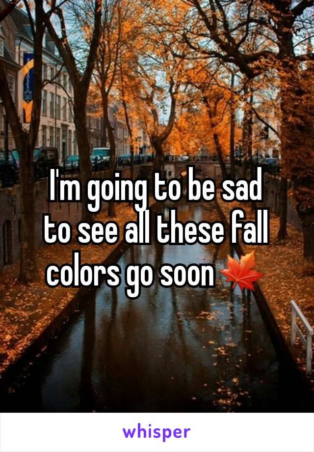 I'm going to be sad to see all these fall colors go soon🍁