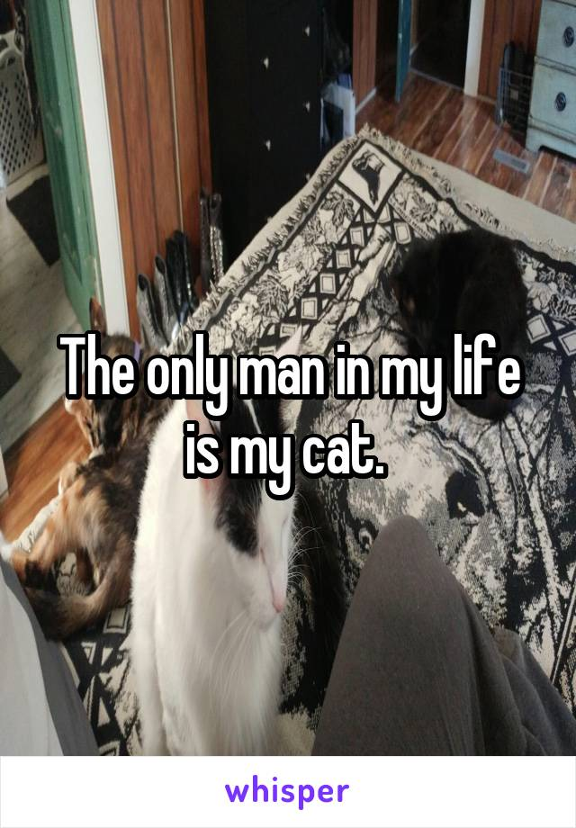 The only man in my life is my cat.