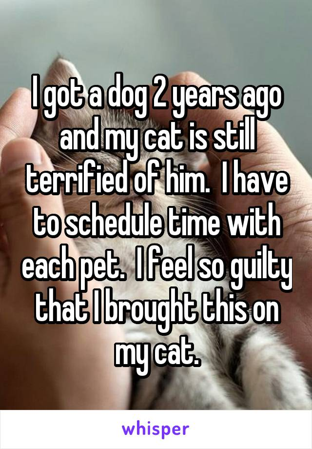 I got a dog 2 years ago and my cat is still terrified of him.  I have to schedule time with each pet.  I feel so guilty that I brought this on my cat.
