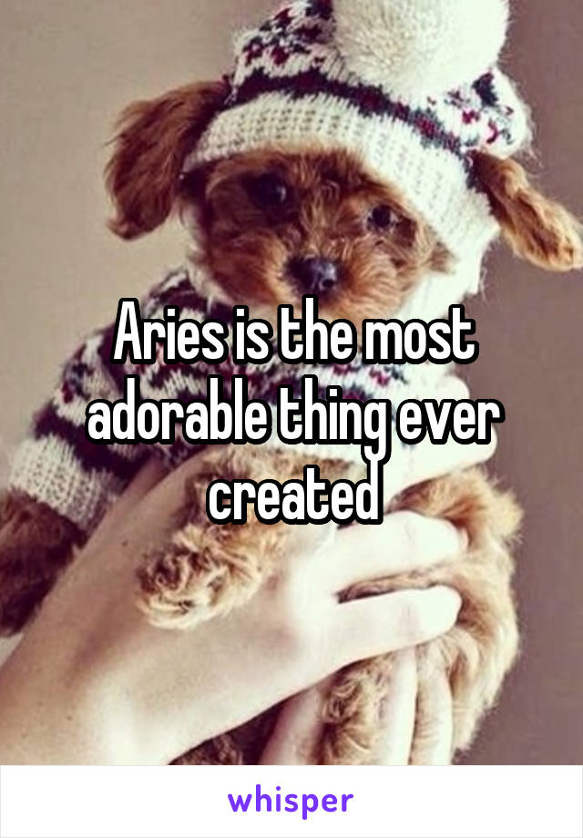 Aries is the most adorable thing ever created