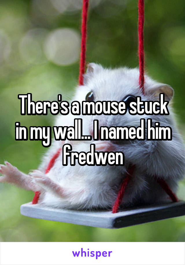 There's a mouse stuck in my wall... I named him fredwen