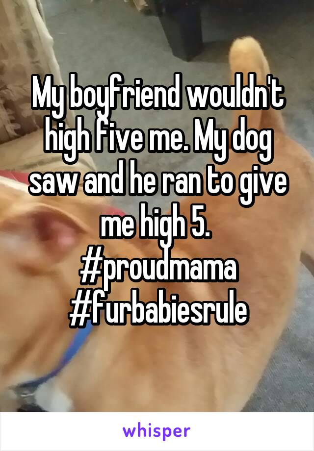 My boyfriend wouldn't high five me. My dog saw and he ran to give me high 5.  #proudmama #furbabiesrule