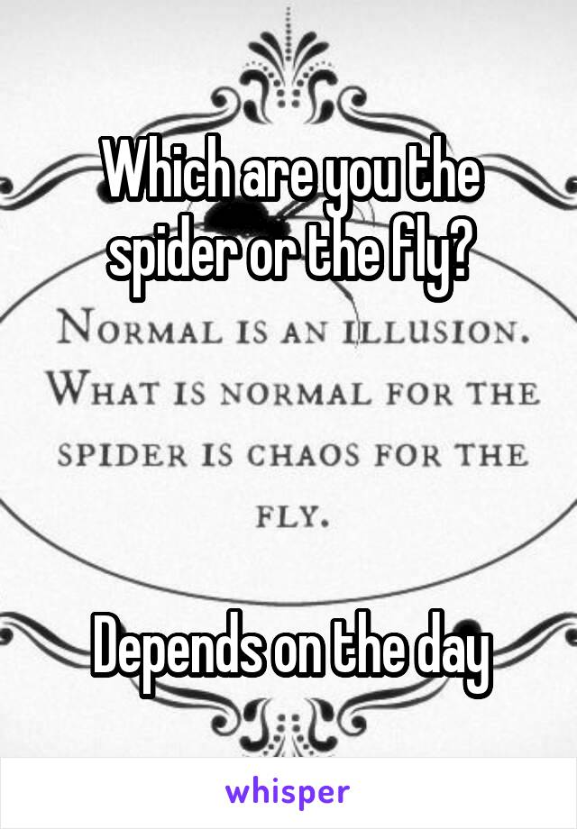 Which are you the spider or the fly?     Depends on the day