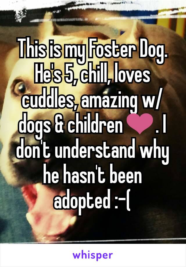 This is my Foster Dog. He's 5, chill, loves cuddles, amazing w/ dogs & children❤. I don't understand why he hasn't been adopted :-(