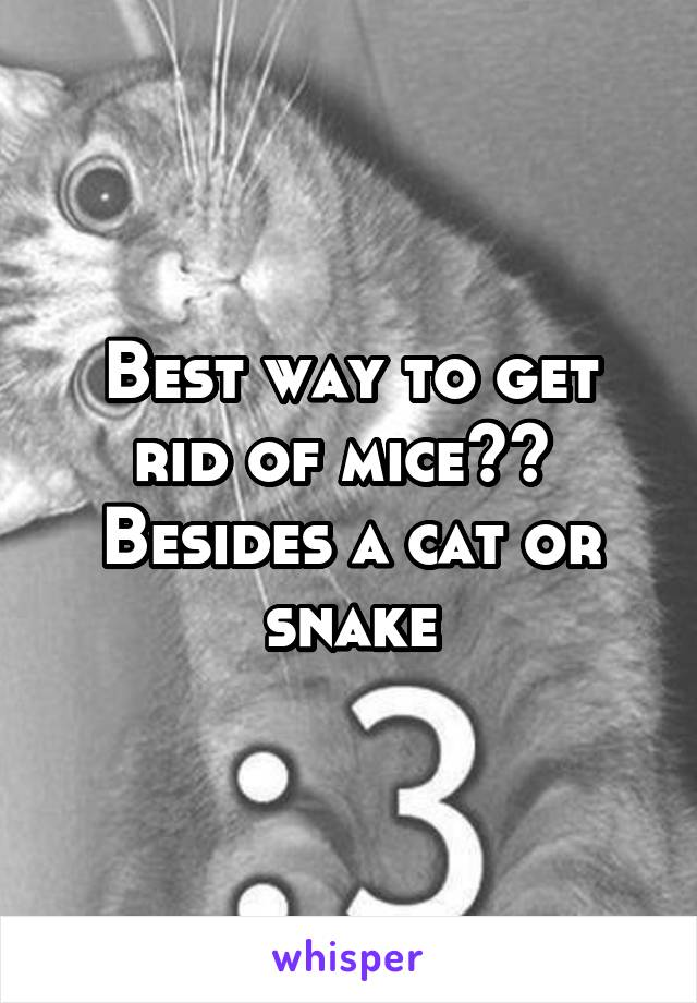Best way to get rid of mice??  Besides a cat or snake
