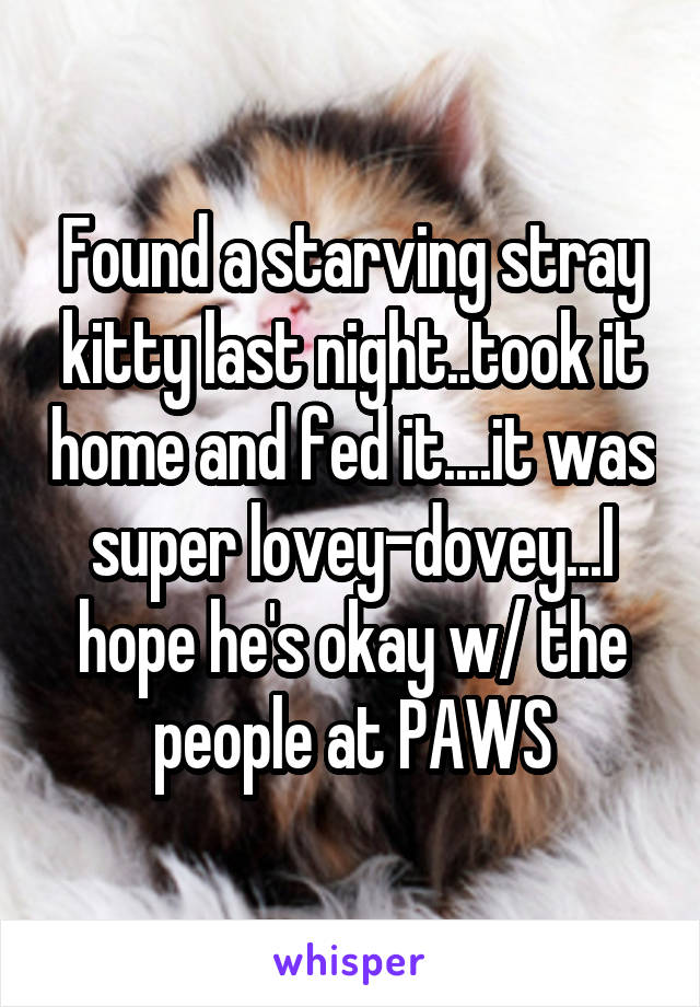 Found a starving stray kitty last night..took it home and fed it....it was super lovey-dovey...I hope he's okay w/ the people at PAWS
