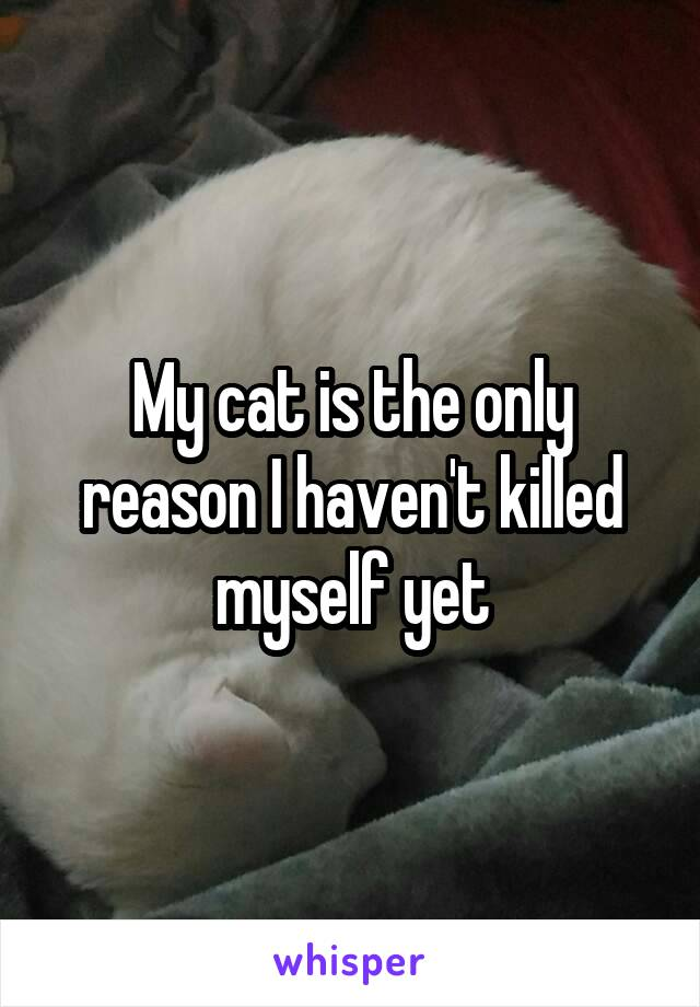 My cat is the only reason I haven't killed myself yet