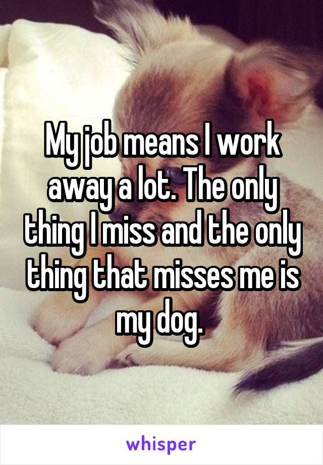 My job means I work away a lot. The only thing I miss and the only thing that misses me is my dog.