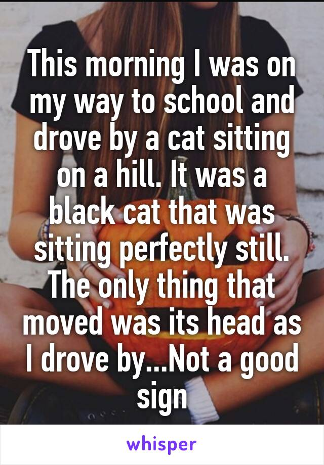 This morning I was on my way to school and drove by a cat sitting on a hill. It was a black cat that was sitting perfectly still. The only thing that moved was its head as I drove by...Not a good sign