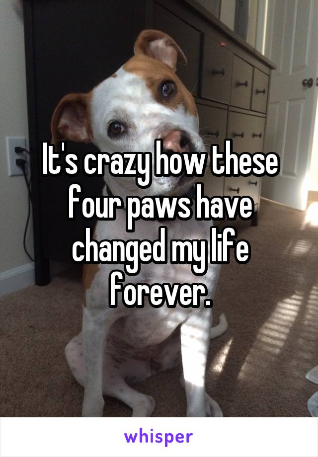 It's crazy how these four paws have changed my life forever.