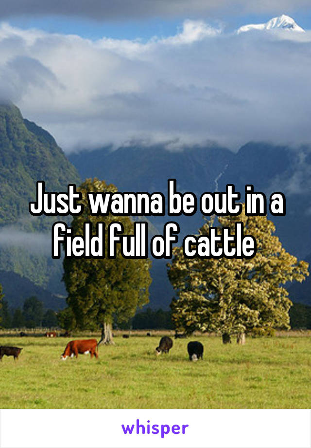 Just wanna be out in a field full of cattle