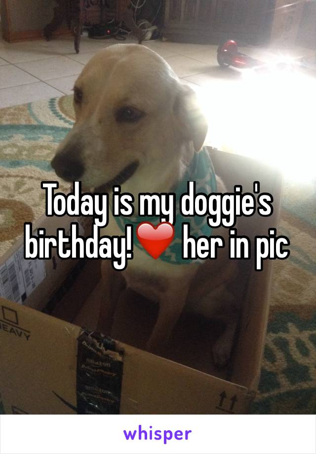 Today is my doggie's birthday!❤️ her in pic