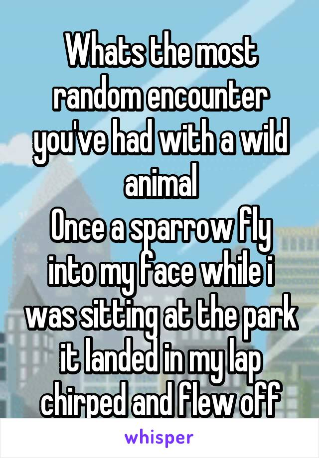 Whats the most random encounter you've had with a wild animal Once a sparrow fly into my face while i was sitting at the park it landed in my lap chirped and flew off