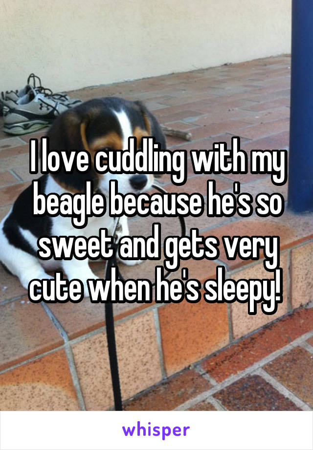 I love cuddling with my beagle because he's so sweet and gets very cute when he's sleepy!