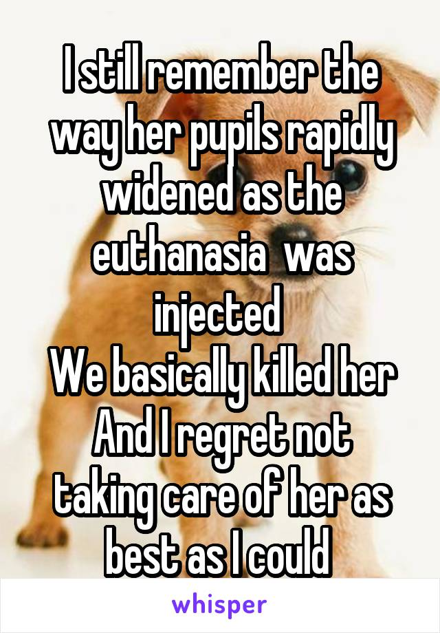 I still remember the way her pupils rapidly widened as the euthanasia  was injected  We basically killed her And I regret not taking care of her as best as I could