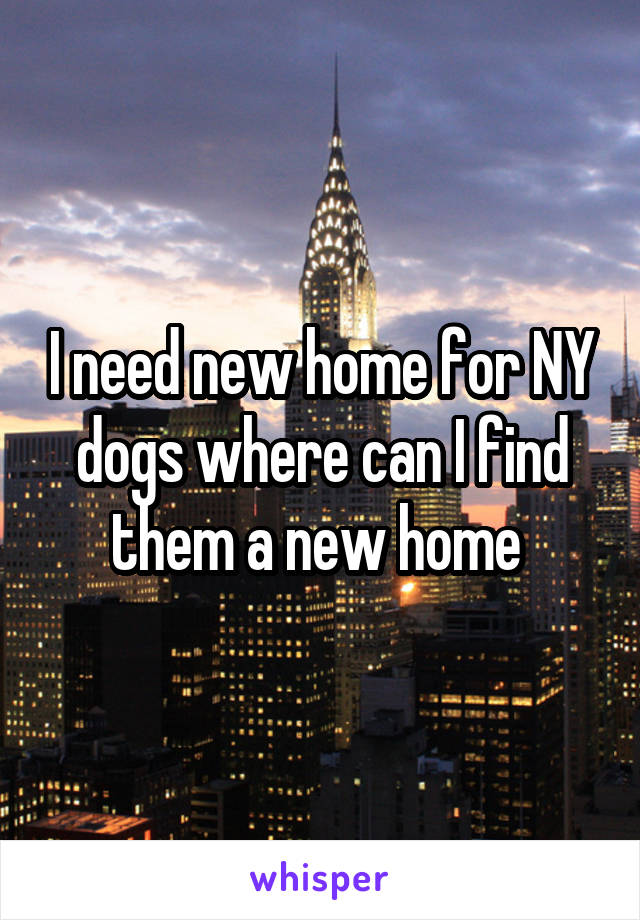 I need new home for NY dogs where can I find them a new home