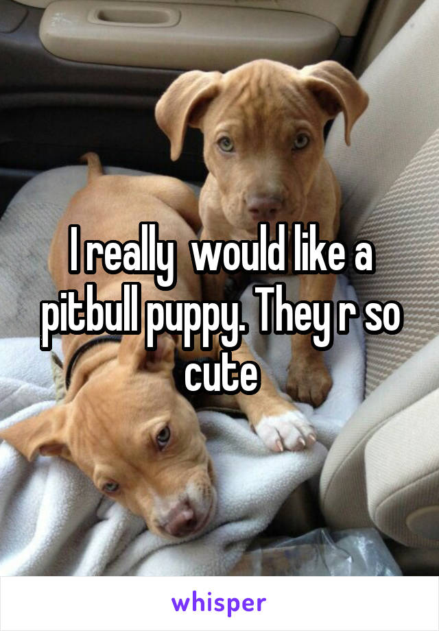 I really  would like a pitbull puppy. They r so cute