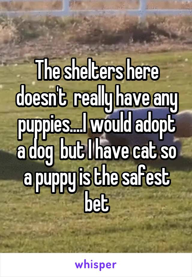 The shelters here doesn't  really have any puppies....I would adopt a dog  but I have cat so a puppy is the safest bet