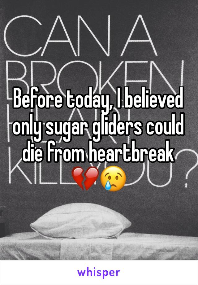 Before today, I believed only sugar gliders could die from heartbreak  💔😢