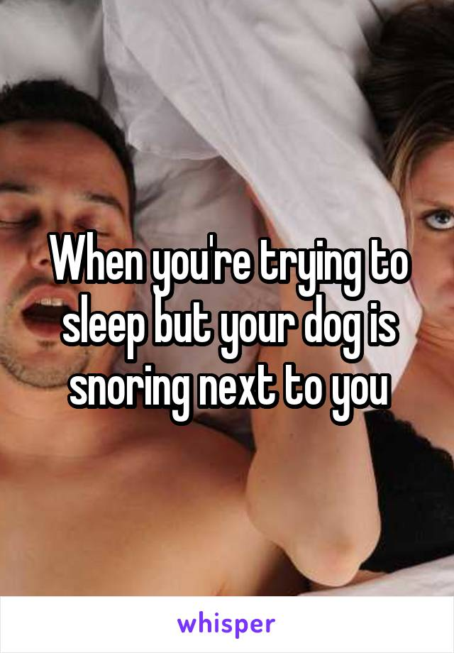 When you're trying to sleep but your dog is snoring next to you