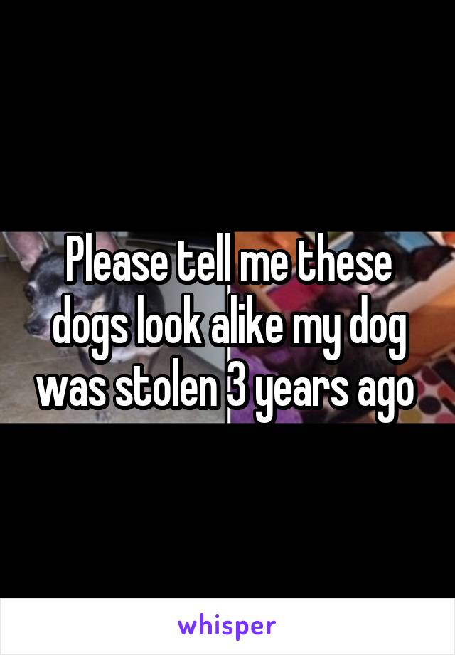Please tell me these dogs look alike my dog was stolen 3 years ago