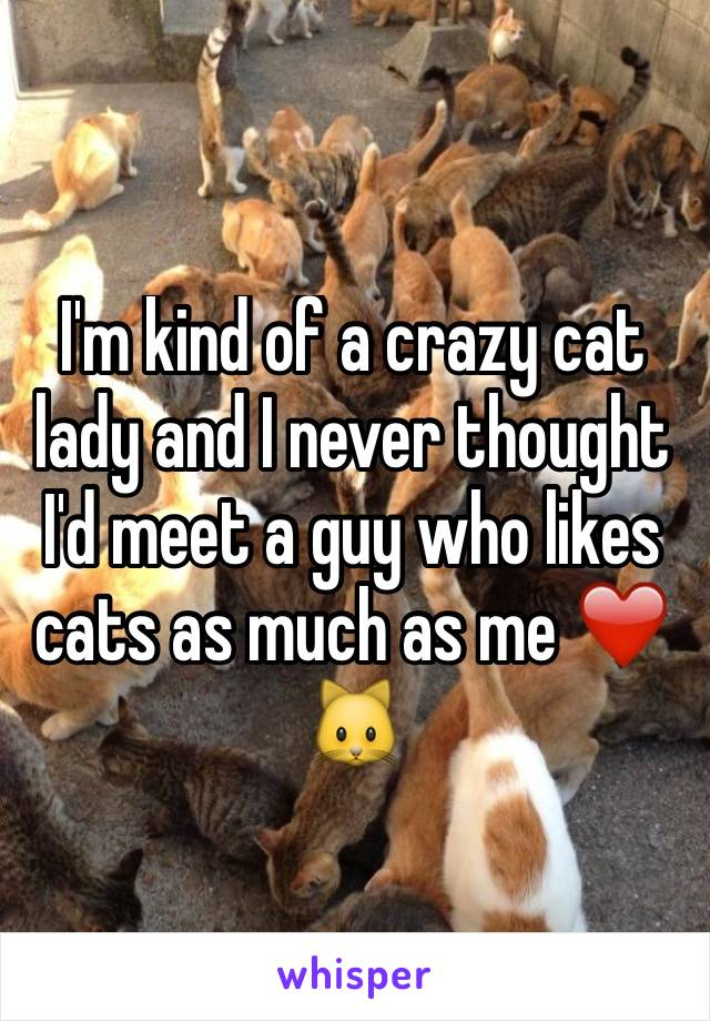 I'm kind of a crazy cat lady and I never thought I'd meet a guy who likes cats as much as me ❤️🐱