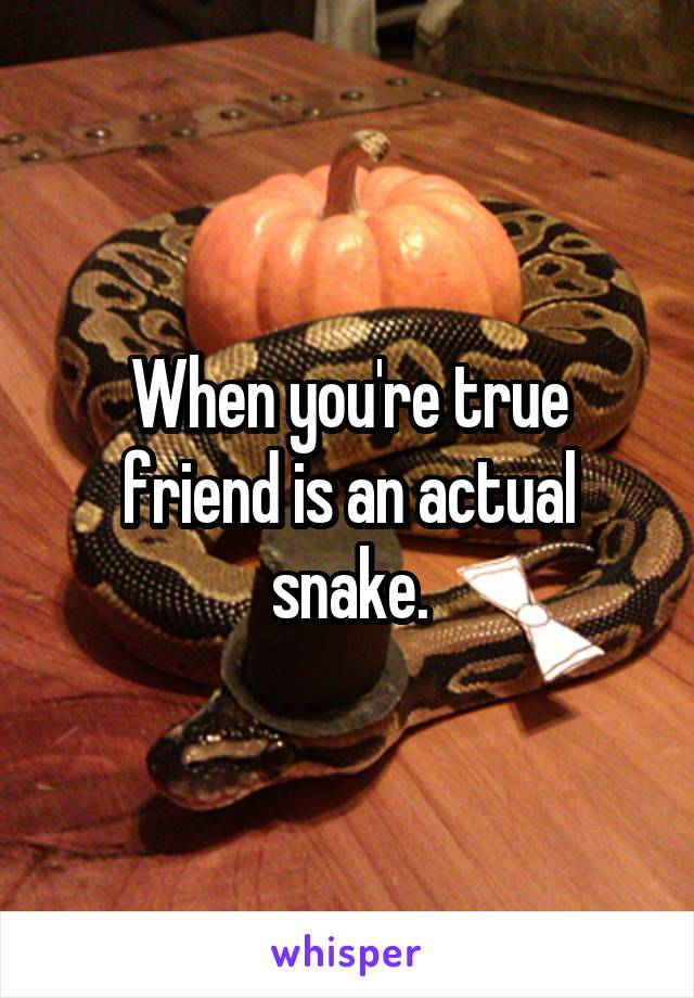 When you're true friend is an actual snake.