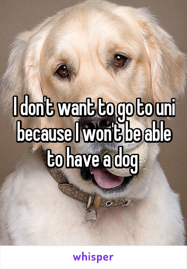 I don't want to go to uni because I won't be able to have a dog