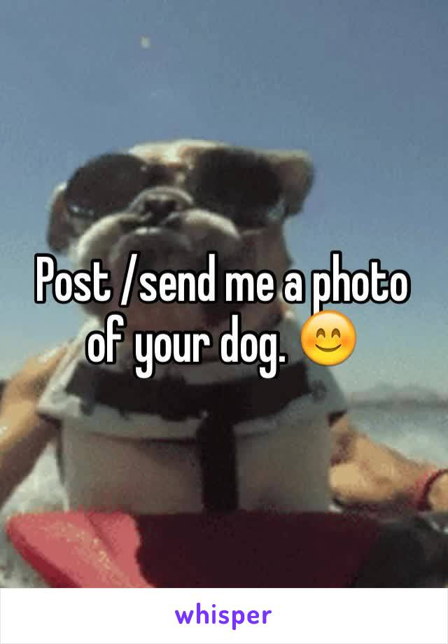 Post /send me a photo of your dog. 😊