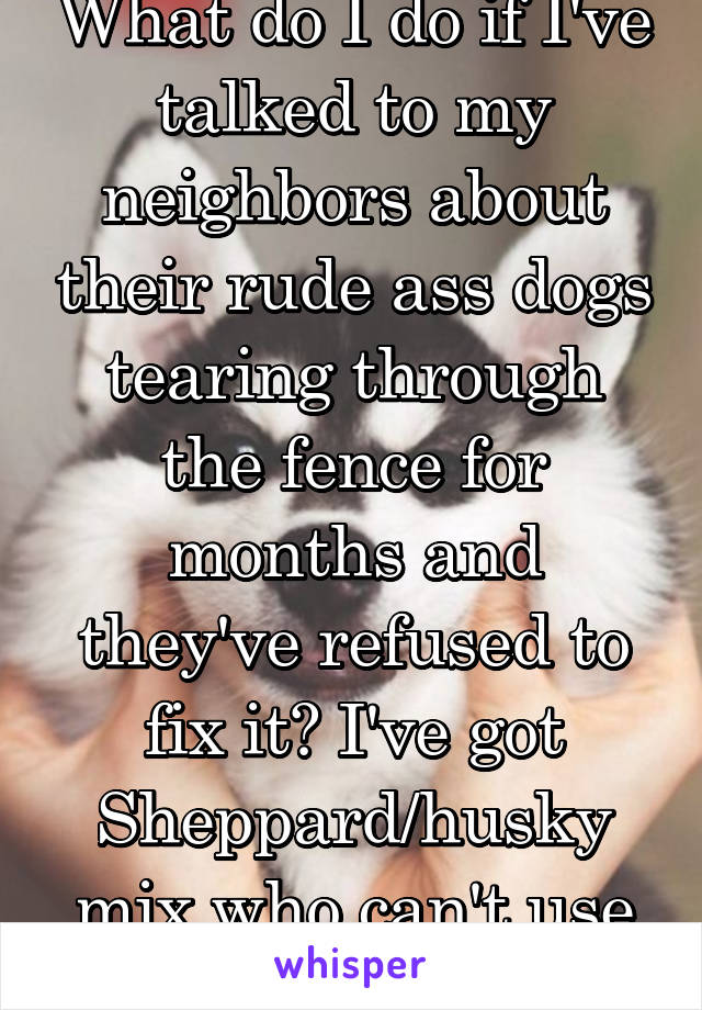 What do I do if I've talked to my neighbors about their rude ass dogs tearing through the fence for months and they've refused to fix it? I've got Sheppard/husky mix who can't use his yard normally