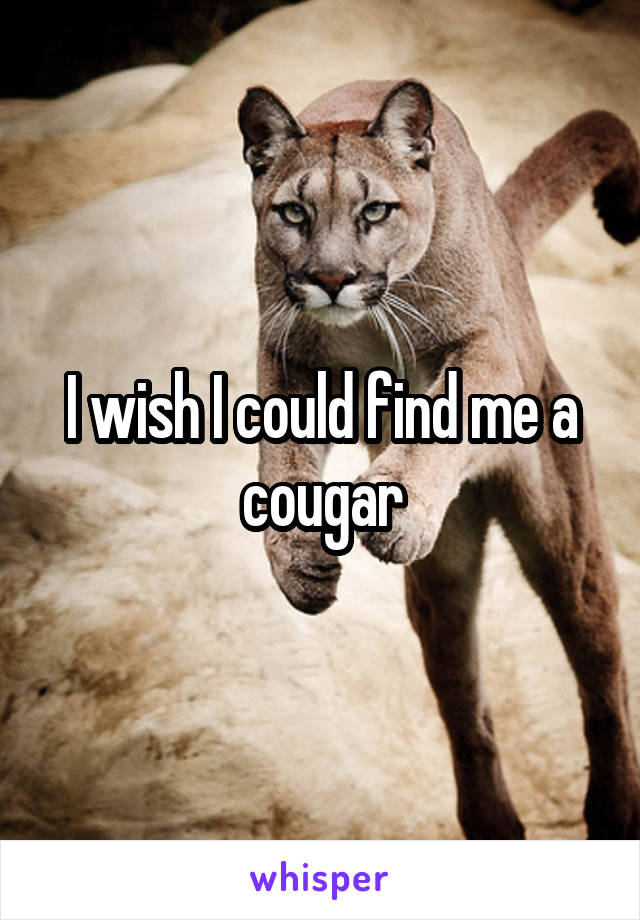 I wish I could find me a cougar